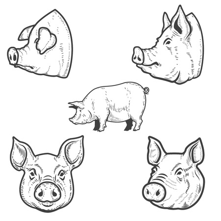 Ilustración de Set of pig illustrations. Pork head. Design element for emblem, sign, poster, badge. Vector illustration - Imagen libre de derechos