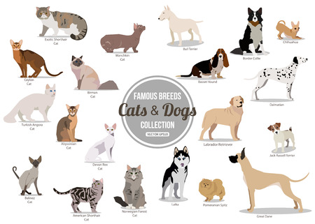Illustration pour Set of flat sitting or walking cute cartoon dogs and dogs. Popular breeds. Flat style design isolated icons. Vector illustration. - image libre de droit
