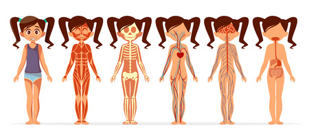 Illustration pour Girl body anatomy vector illustration. Cartoon medical female human body structure of muscular, skeletal, blood and vein circulatory or nervous and digestive system flat design for infographics - image libre de droit