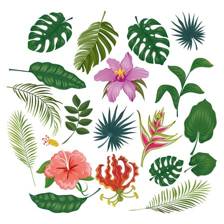 Illustration pour Cute tropical stickers and labels on white background. Summer set of leaves and flowers. Vector illustration - image libre de droit