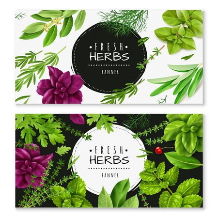 Spices Herbs Horizontal Banners Two Horizontal Banners With A Realistic Fresh Herbs Isolated Objects Popular Culinary Plants Royalty Free Vector Graphics