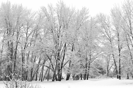 winter white trees icy jungle
