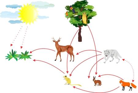 Illustration pour Food chain, ecosystem connections illustration - image libre de droit