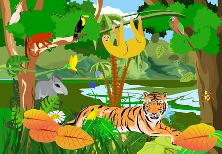Illustration pour Amazon jungle fauna vector illustration - image libre de droit