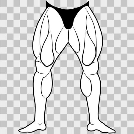 Illustration pour Vector image lower body man. The muscles of the legs on a transparent background - image libre de droit