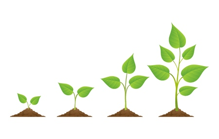 Illustration pour Plants grow isolated on white background or plant seed, growing and cultivation vector illustration - image libre de droit