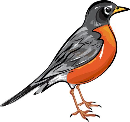 Ilustración de American Robin bird illustration - Imagen libre de derechos