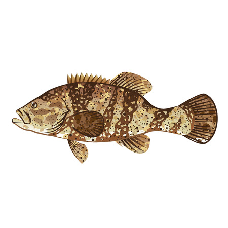Vektor für Goliath Grouper Gamefish ocean vector illustration - Lizenzfreies Bild