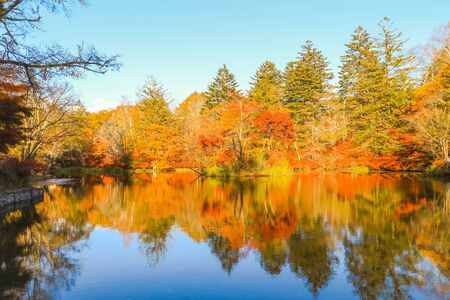 Photo for Beautiful Japan autumn at Kumoba Pond or Kumoba ike of Karuizawa ,Nagano Prefecture Japan. - Royalty Free Image