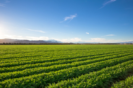 Photo pour Organic Farm Land Crops In California Multiple layers of mountain view and fertile farm land in California. Lots of colors and clear skies. - image libre de droit