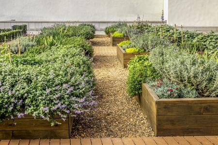 Foto de Raided beds in an urban garden growing plants herbs spices and vegetables - Imagen libre de derechos