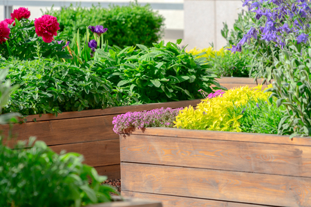 Foto de Raised beds in an urban garden growing plants herbs spices and vegetables - Imagen libre de derechos