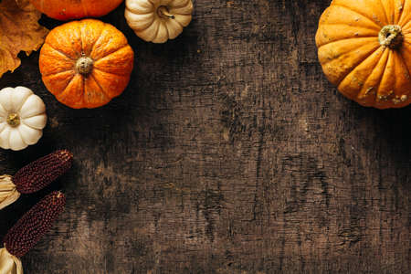 Foto per Pumpkins on a dark background. - Immagine Royalty Free