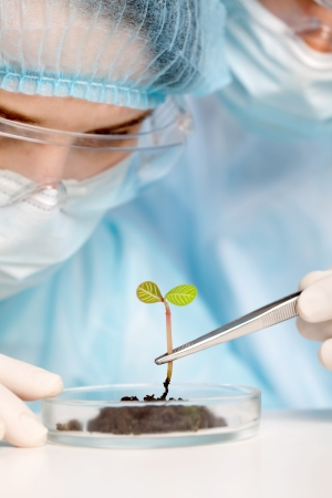 Plant in a test tube in hands of