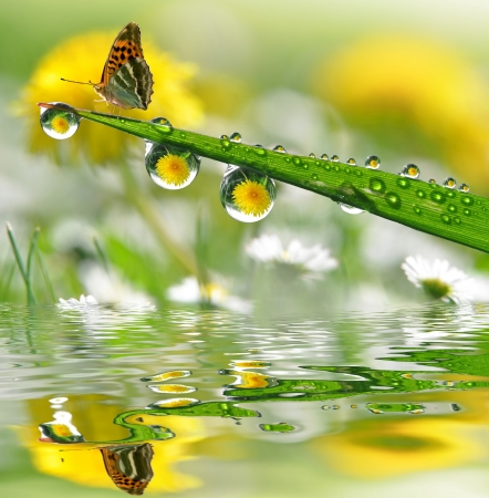 Photo for water drops on green grass with butterfly  - Royalty Free Image