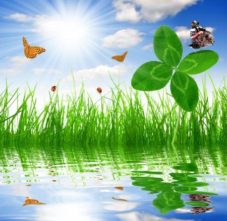 Clover quarterfoils with butterflies over a fresh spring grass