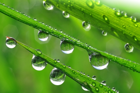 Foto de Fresh grass with dew drops close up  - Imagen libre de derechos