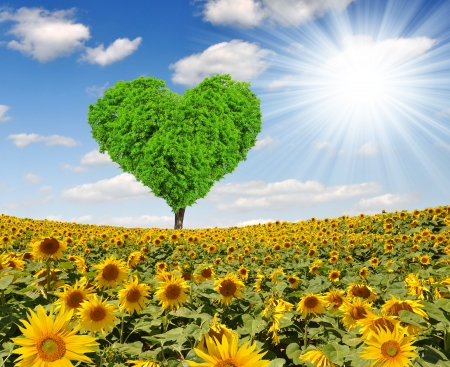 Photo pour Spring tree in the shape heart on sunflower field  - image libre de droit