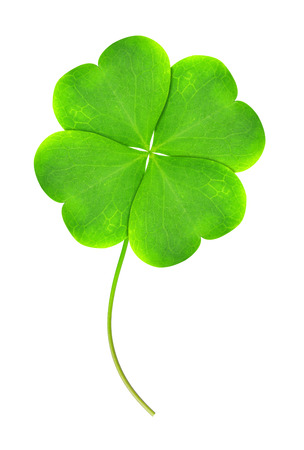 Green clover leaf isolated on white background