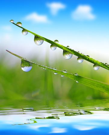 Photo pour Fresh grass with dew drops close up - image libre de droit