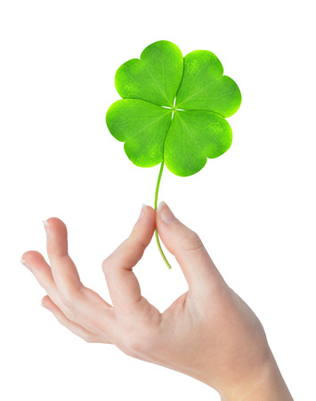 Green four leaf clover in hand isolated on white background