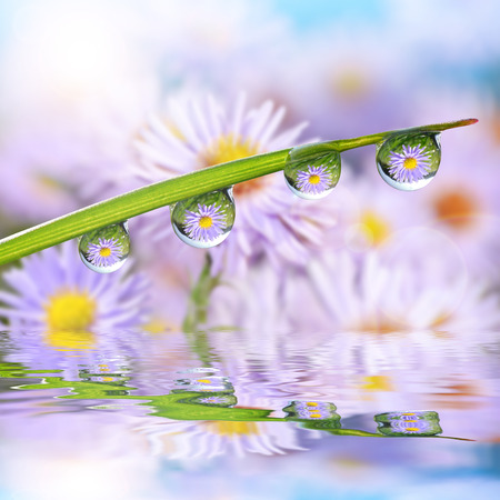 Photo pour Flowers in the drops of dew on the green grass. Nature background. - image libre de droit