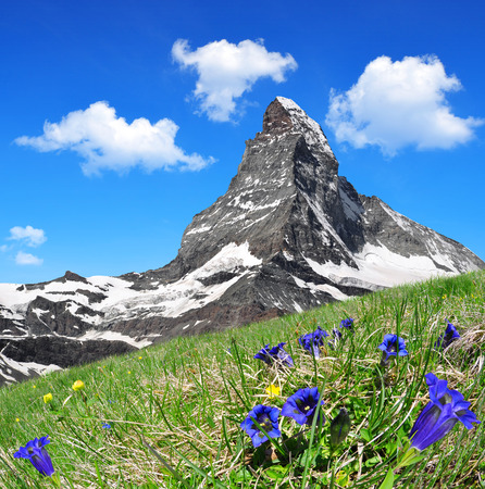 Foto de Beautiful mountain Matterhorn in the foreground blooming gentian, Pennine Alps, Switzerland - Imagen libre de derechos