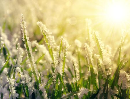 Photo pour Frozen grass at sunrise close up. Nature background. - image libre de droit