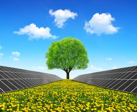 Photo pour Solar energy panels and tree on dandelion field. Clean energy. - image libre de droit