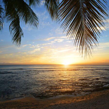 Photo pour Coconut palm tree at sunset.Tropical coast of Mauritius island. Indian ocean. - image libre de droit