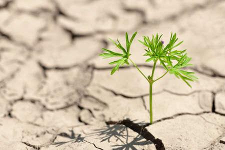 Photo pour Smal plant growing from dried cracked soil. - image libre de droit