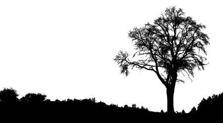 Illustration pour Silhouette of tree, bush with bare branches. Winter scenery trees and black space for text, isolated - image libre de droit