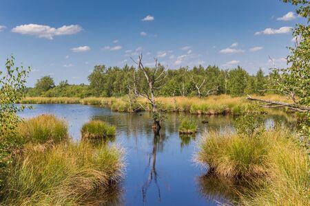 Photo for Wetlands of the national park Dwingelderveld in Drenthe, Netherlands - Royalty Free Image
