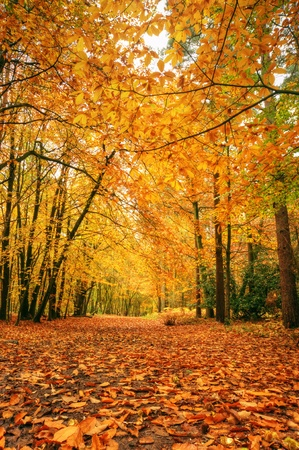 Foto per Beautiful autumn fall forest scene with vibrant colors and excellent detail - Immagine Royalty Free