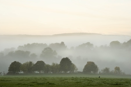 Beauttiful stirring forest and field scene with layers of mist and fog before sunrise