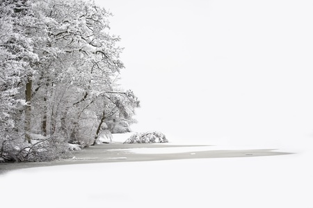 Beautiful Winter forest scene with deep virgin snow and plenty of space for your text and copy space
