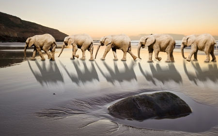 Foto de Elephants following leader in unique and abstract image of leadership and teamwork - Imagen libre de derechos