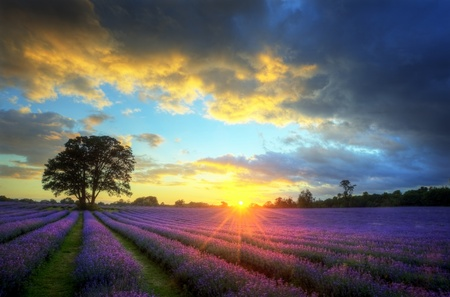 Photo for Beautiful image of stunning sunset with atmospheric clouds and sky over vibrant ripe lavender fields in English countryside landscape - Royalty Free Image