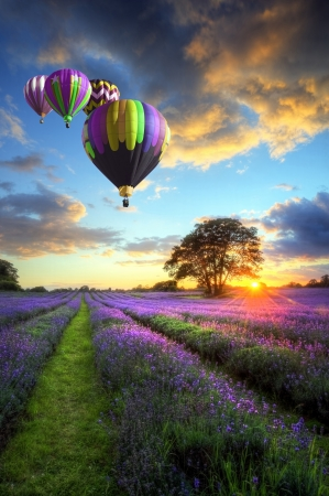 Photo pour Beautiful image of stunning sunset with atmospheric clouds and sky over vibrant ripe lavender fields in English countryside landscape with hot air balloons flying high - image libre de droit