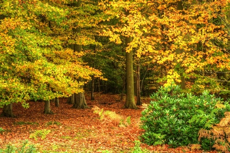 Autumn Fall forest with vivid colors and detail