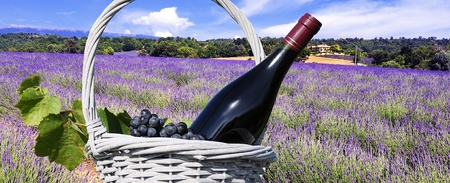 mage shows a lavender field in the region of Provence, southern France
