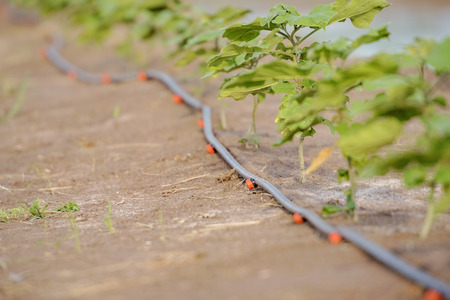 Photo pour Drip Irrigation System. Water saving drip irrigation system being used in field. - image libre de droit
