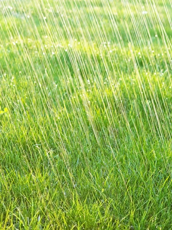 grass and rain - background