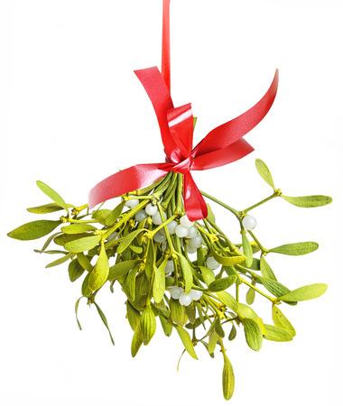 Photo pour mistletoe isolated on a white background - image libre de droit