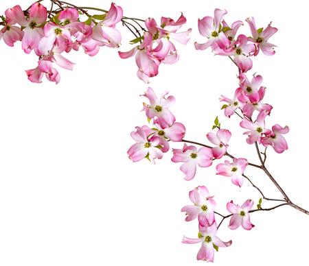 Photo pour spring  branch with flowers - image libre de droit