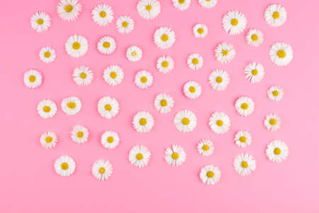 Photo for Floral layout with small white daisy flowers on pink paper background. - Royalty Free Image