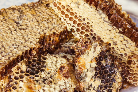Heavy, viscous flower honey in honeycombs. Product of the life of bees. The cells are covered from above with a thin layer of beeswax. Daylight.