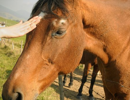 Caressing an horse