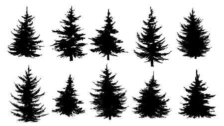 Illustration pour Set of silhouettes of pine trees, spruce or fir trees. Vector illustration. - image libre de droit