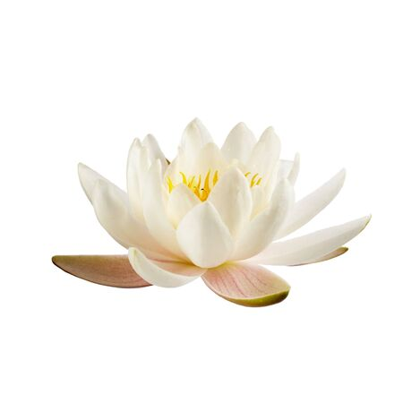 Photo pour White water lily or lotus isolated on white background - image libre de droit